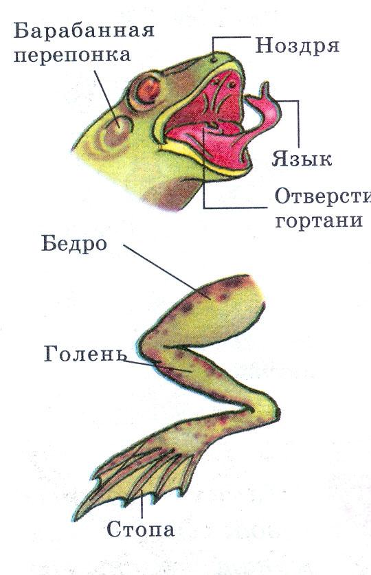 Боли в шейном отделе спины лечение